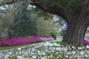 Flowers at Bocage Plantation